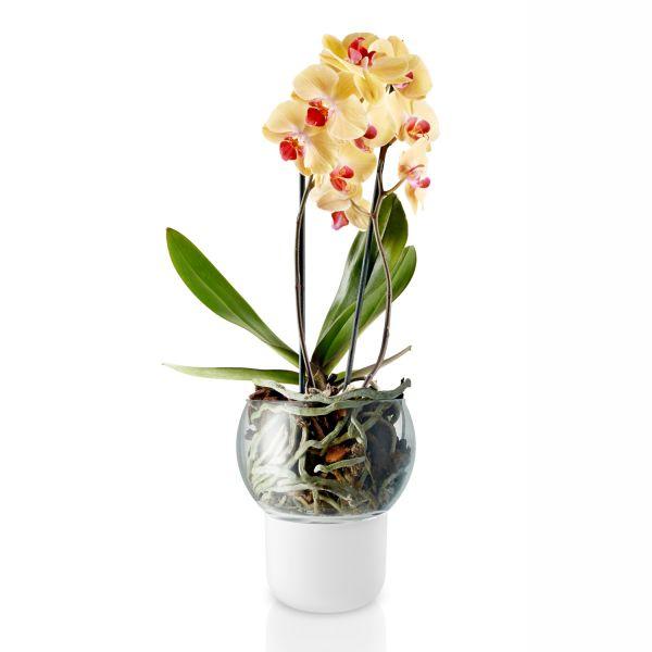 Orchideentopf